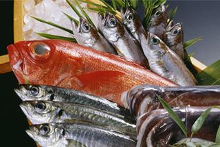 乾燥試験 魚