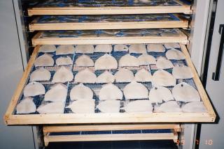 イカの低温乾燥テスト