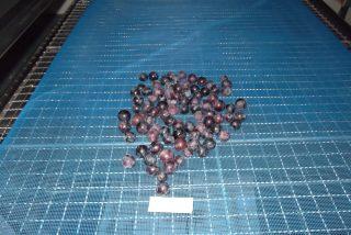 農産品 山梨県産干しブドウの低温乾燥テスト